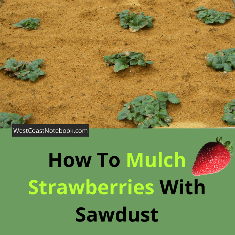 How To Mulch Strawberries With Sawdust