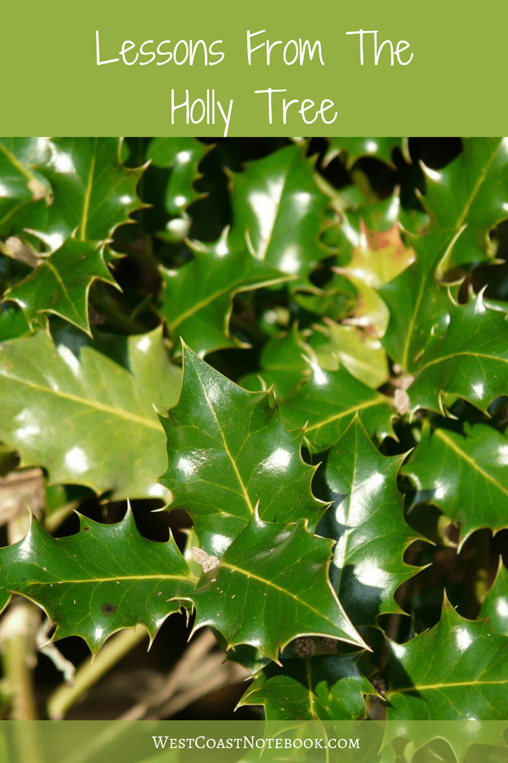 lessons from the holly tree