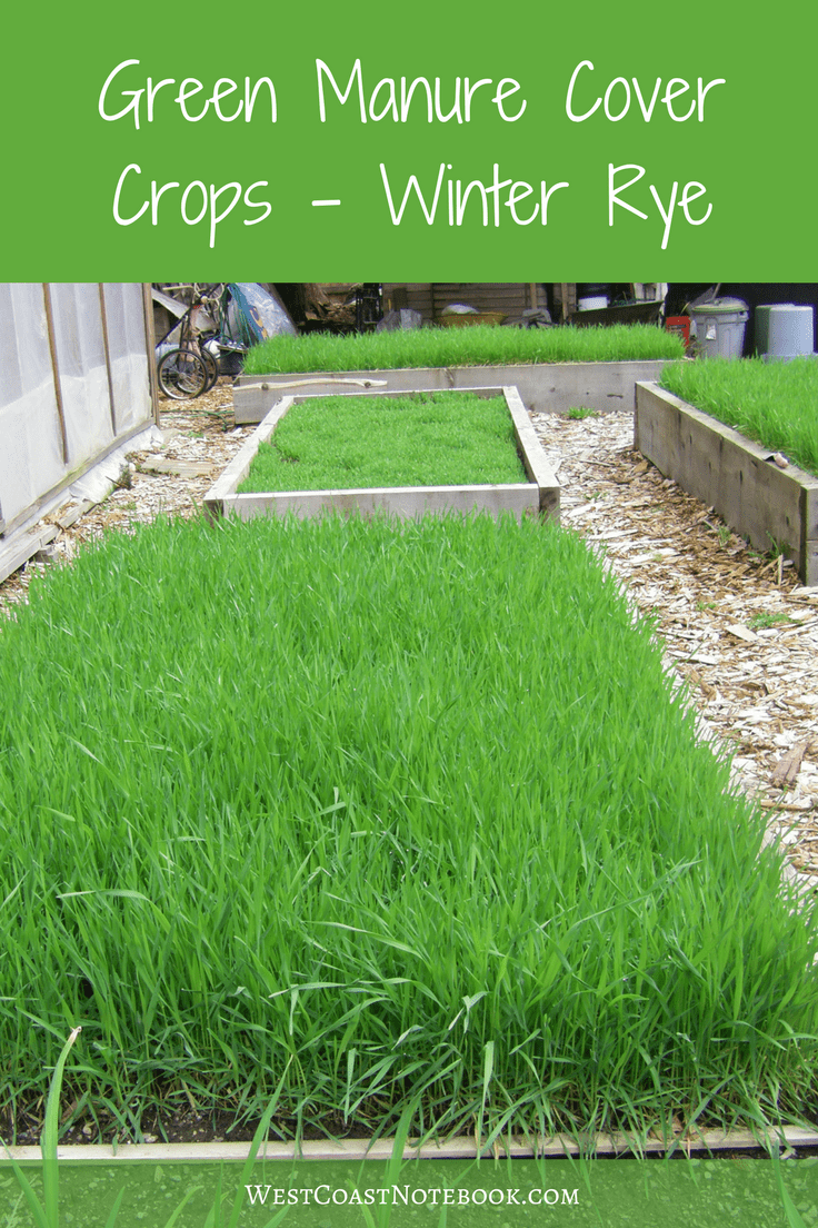 Green Manure Cover Crops - Winter Rye