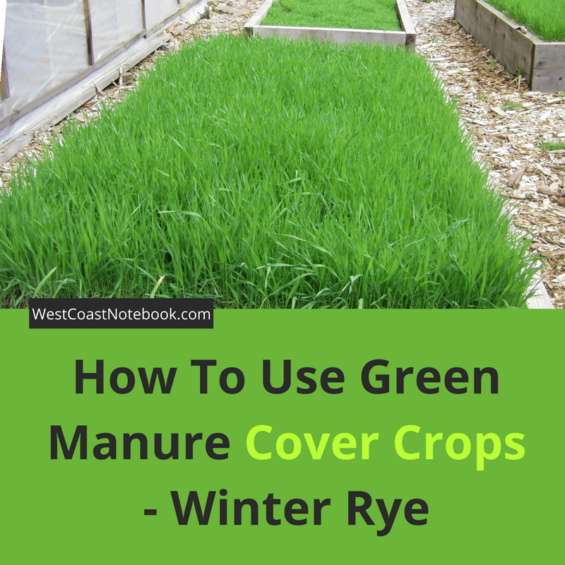 How To Use Green Manure Cover Crops - Winter Rye