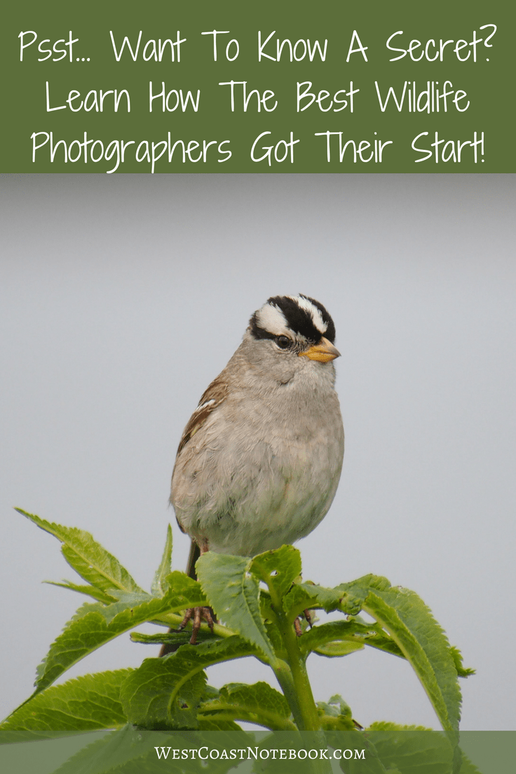 Want To Know A Secret - Learn How The Best Wildlife Photographers Got Their Start