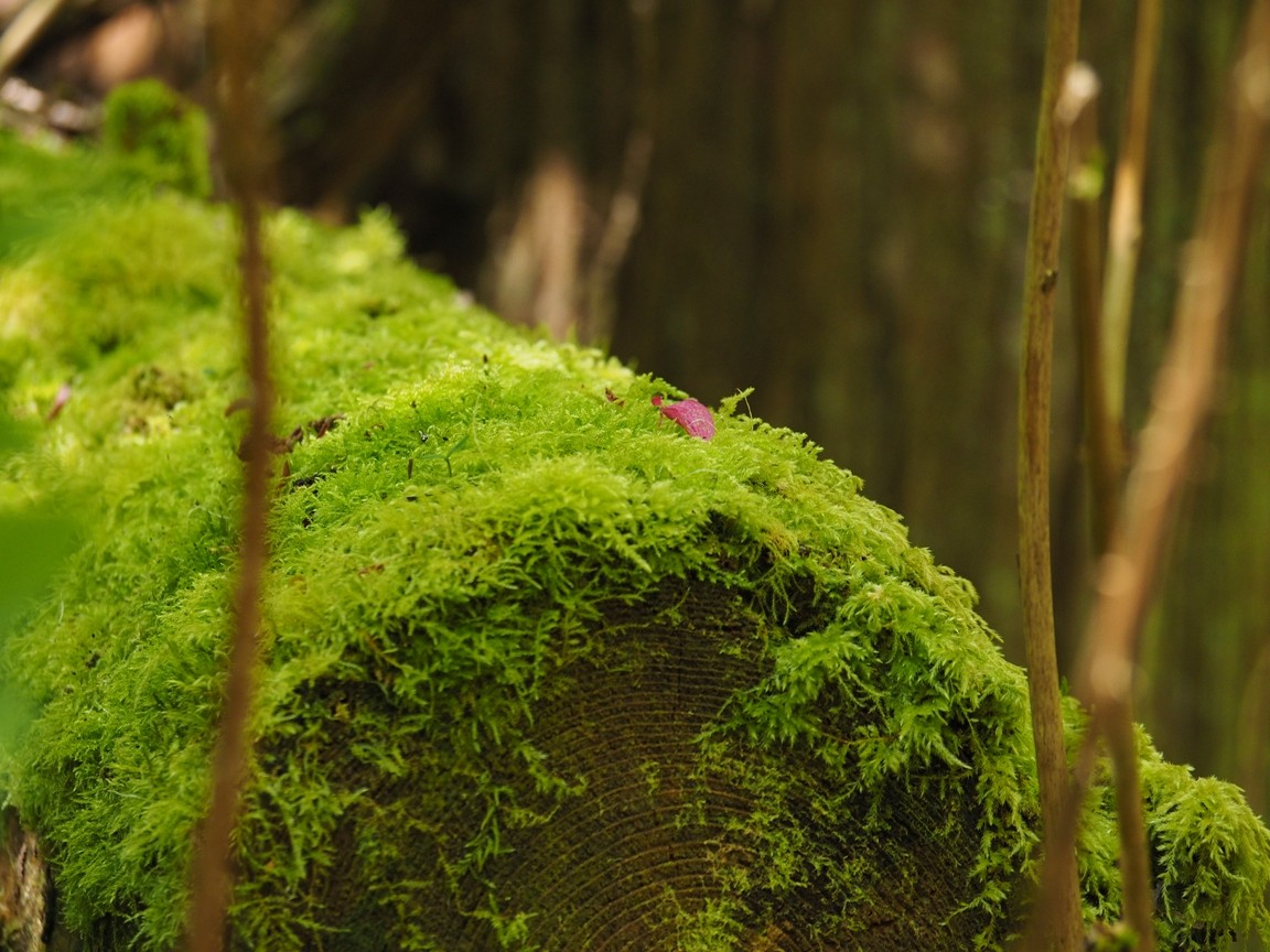 flower petal on moss log