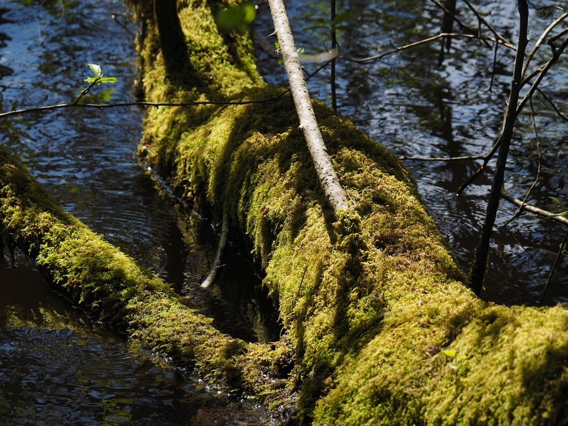 tree with moss by the water