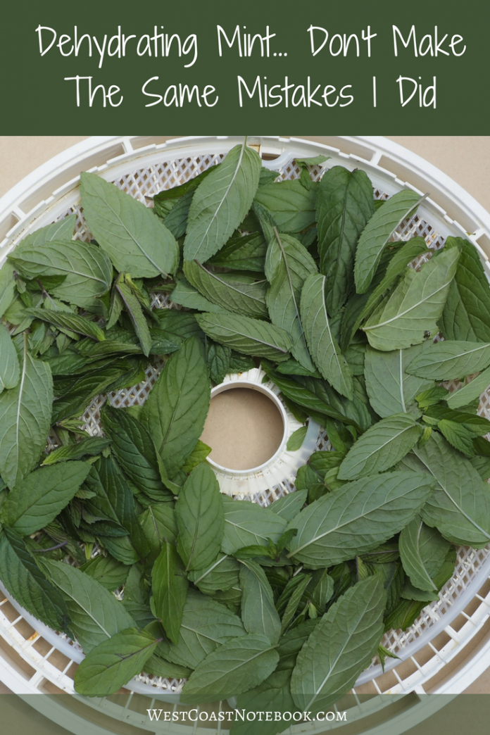 Dehydrating Mint. Don't Make The Same Mistakes I Did