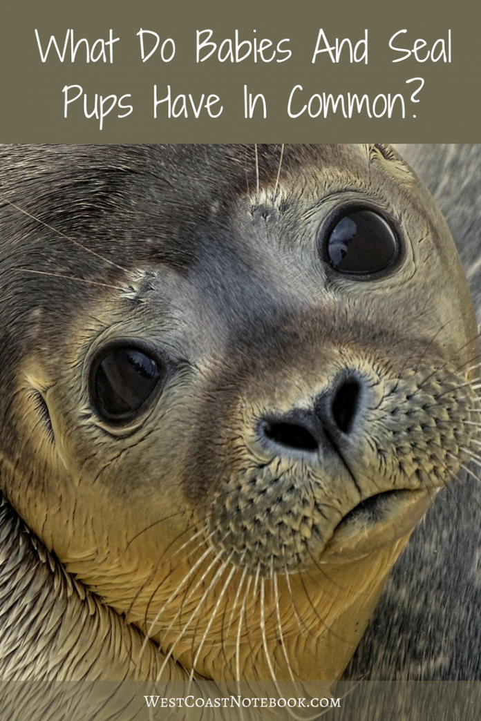 What Do Babies And Seal Pups Have In Common?