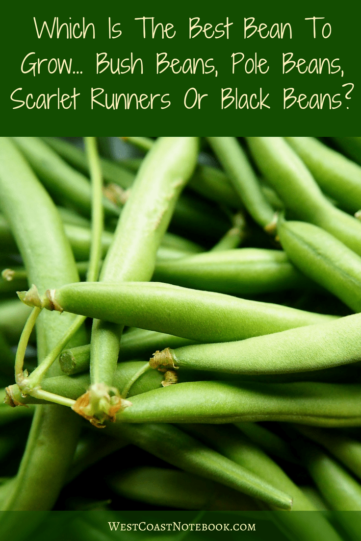 Which Is The Best Bean To Grow Bush Beans, Pole Beans, Scarlet Runners or Black Beans