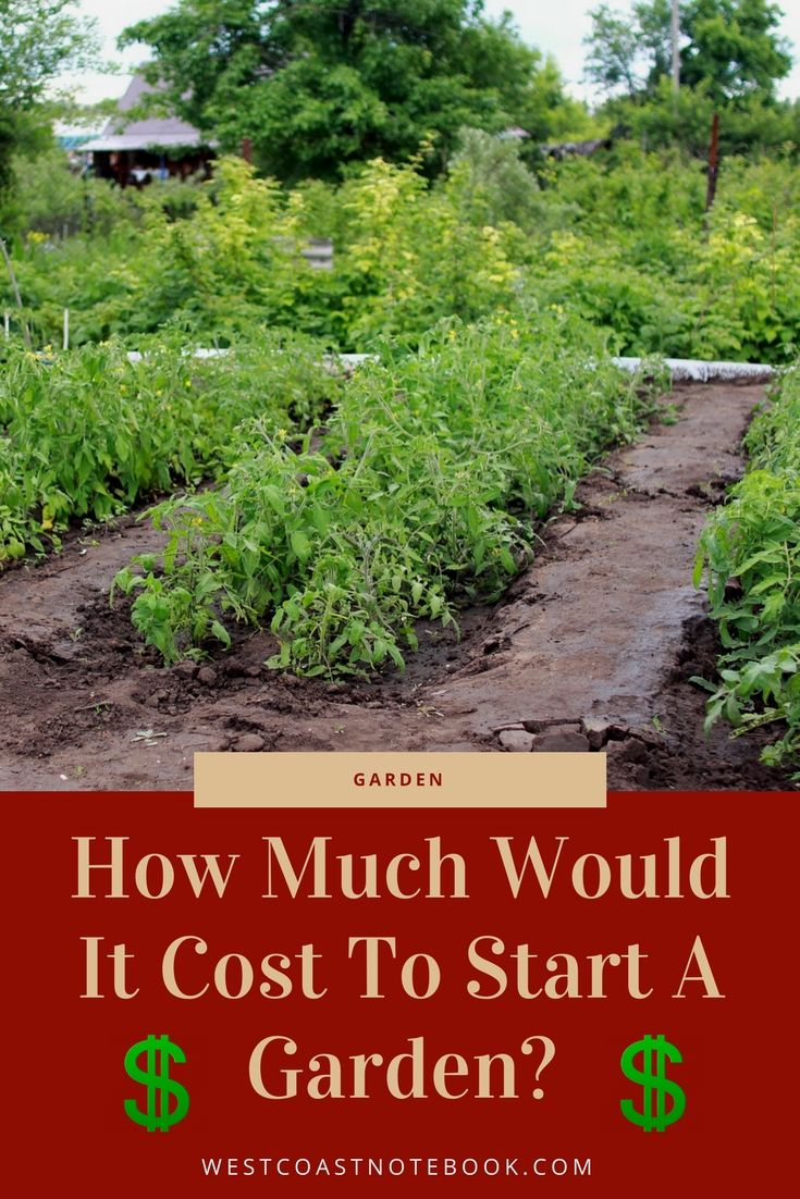 How Much Would It Cost To Start A Garden
