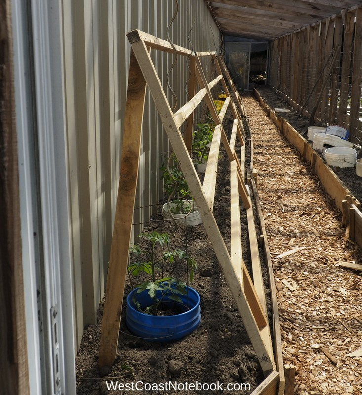 trellis for tomatoes