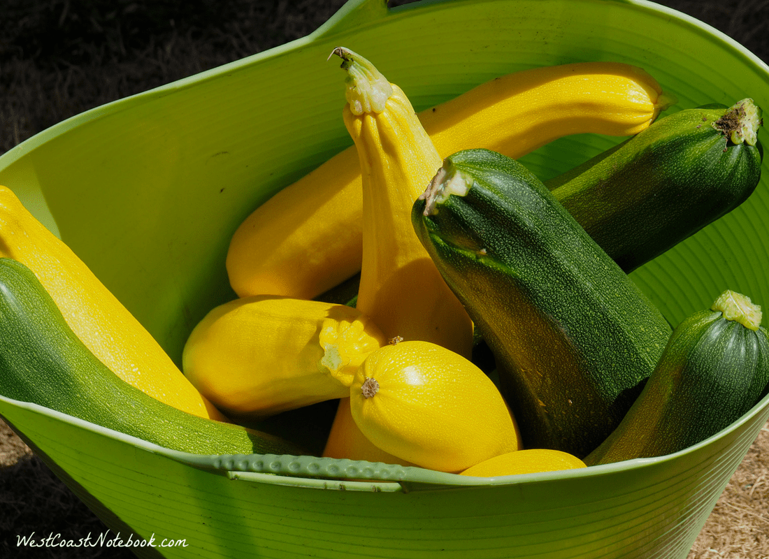 an excess of zucchini - 30 lbs worth