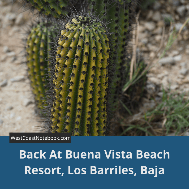 Back At Buena Vista Beach Resort, Los Barriles, Baja