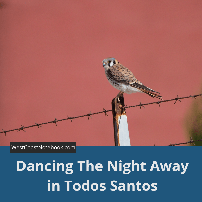 Dancing The Night Away in Todos Santos