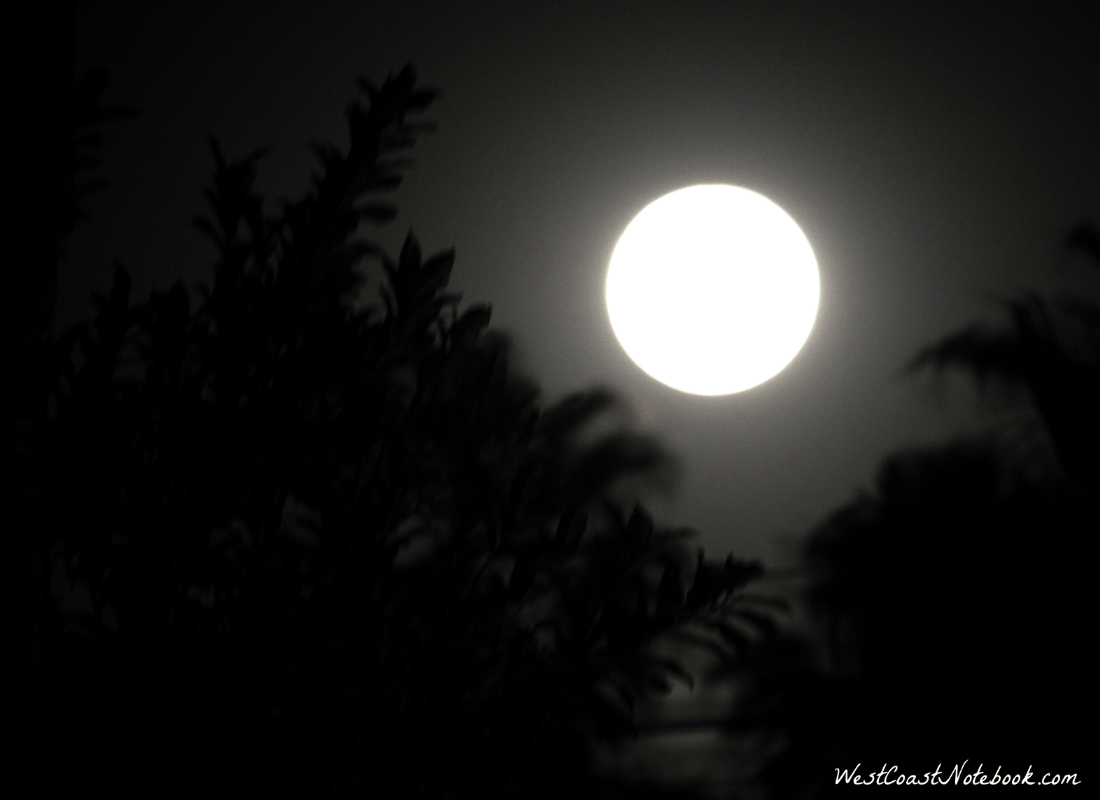 Full moon in Todos Santos