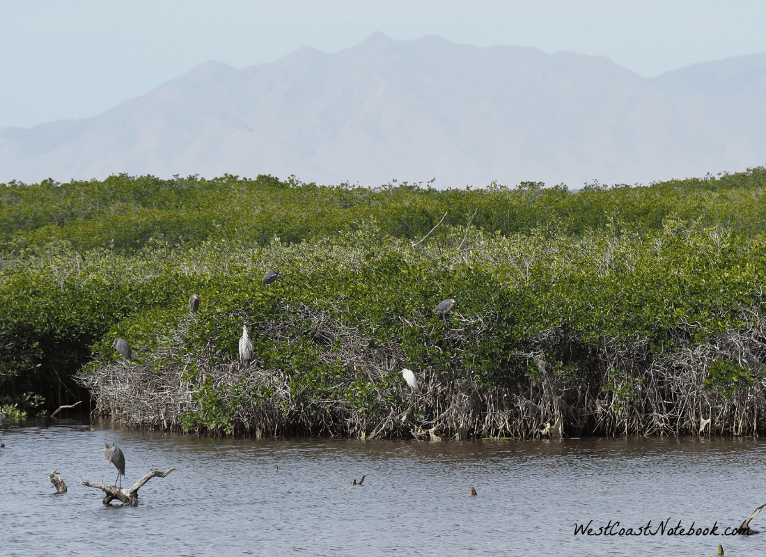 How many egrets and herons can you see?