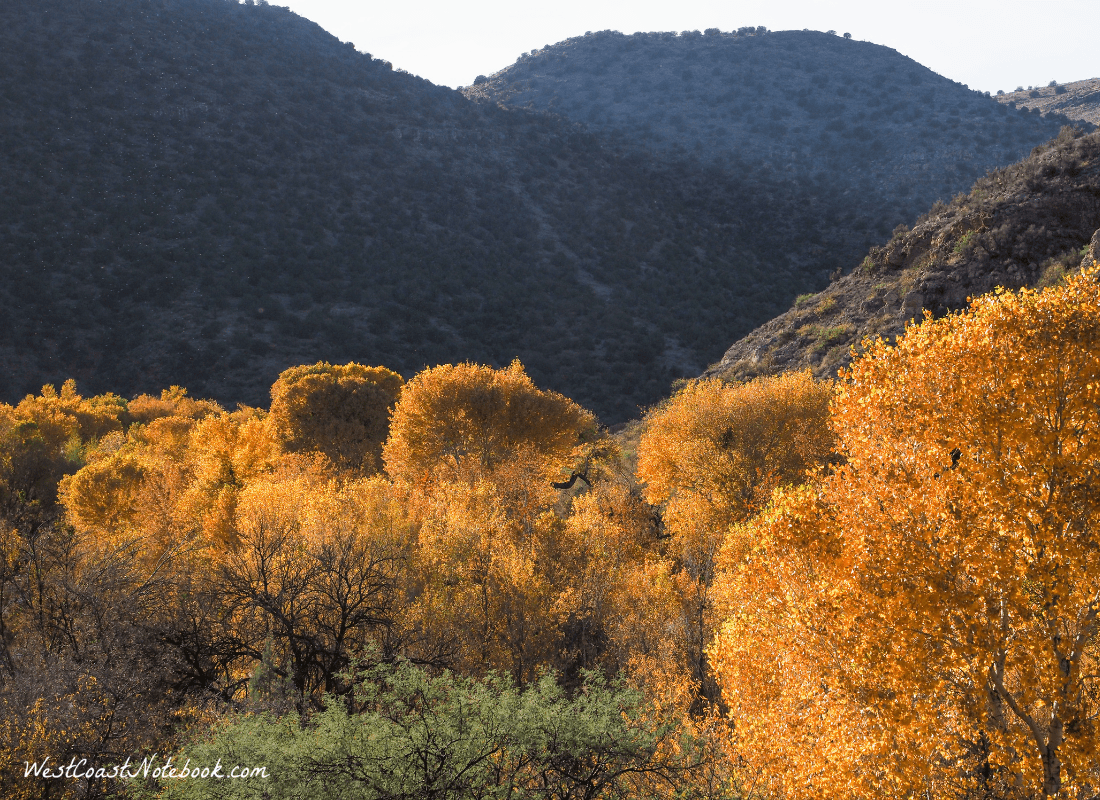 Fall leaves on Verde Canyon
