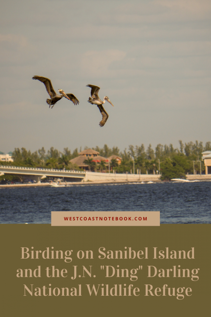 Birding on Sanibel Island and the J.N.