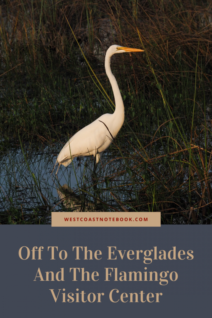Off To The Everglades And The Flamingo Visitor Center